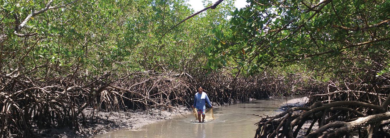Ilha de Itaparica: A arte da vida local